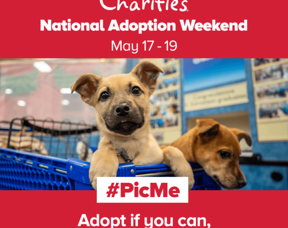 Petsmart National Adoption Weekend Event May 17 19 Beaumont Pets Alive